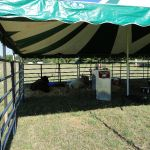2012-midwest-cow-camp-015