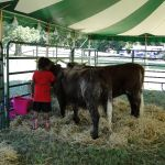 2012-midwest-cow-camp-018