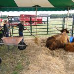 2012-midwest-cow-camp-033