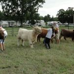 2012-midwest-cow-camp-082