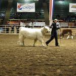 2012 Stock Show 45