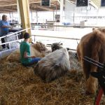 2014 Boulder County Fair & WY State Fair 002