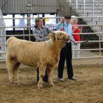 2014 Boulder County Fair & WY State Fair 005