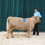 Almosta Farm Rose - 2nd place in Best Pair of Females - 2014 Boulder County Fair