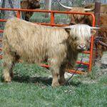 2014 calves & CA trip 005