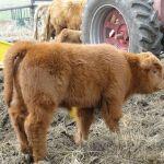 2014 calves & CA trip 017