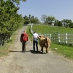 2014 calves & CA trip 025