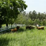 2014 calves & CA trip 053