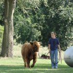 eric-2013-cow-camp-022-jpg