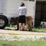 eric-2013-cow-camp-032-jpg