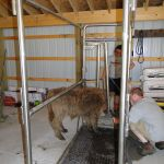 eric-2013-cow-camp-039-jpg