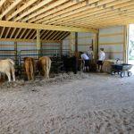 eric-2013-cow-camp-044-jpg