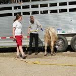 eric-2013-cow-camp-052-jpg