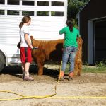 eric-2013-cow-camp-053-jpg