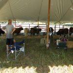 eric-2013-cow-camp-056-jpg