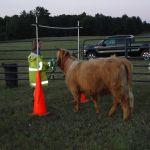 eric-2013-cow-camp-133-jpg