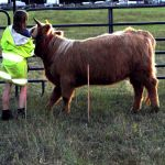 eric-2013-cow-camp-135-jpg