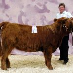 Reserve Grand Champion Female Almosta Farms Salli